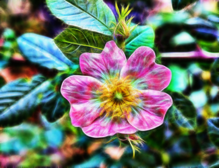 abstract Beautiful forest flower with pink petals