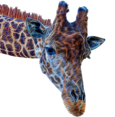 fractal Giraffe head face isolated on white background