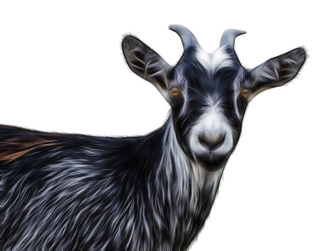 abstract fractal  Portrait of black goat on a white background Stockfoto