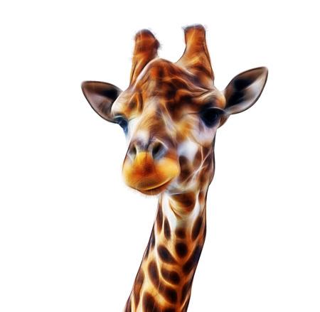 fractal Giraffe head face isolated on white background Imagens