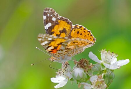 big beautiful butterfly sits on flower Imagens