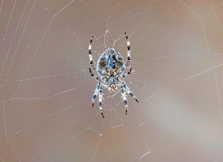 a large grey spider sits on the web on a Sunny day Stok Fotoğraf
