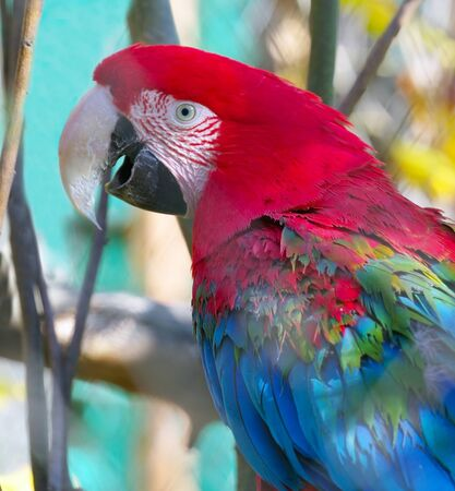 big beautiful colorful parrot in the zoo Фото со стока