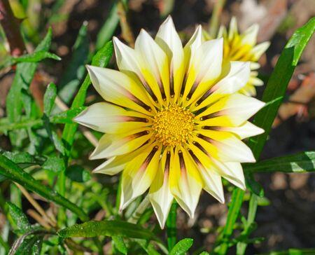 Single gerbera flower into the park Фото со стока