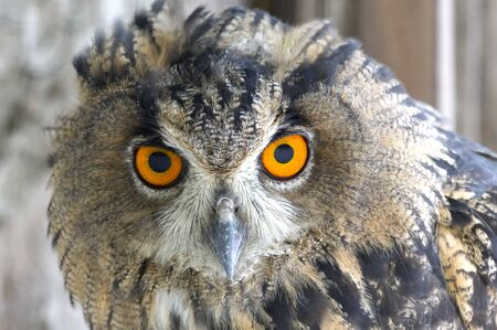 the Photo of an beautiful Owl