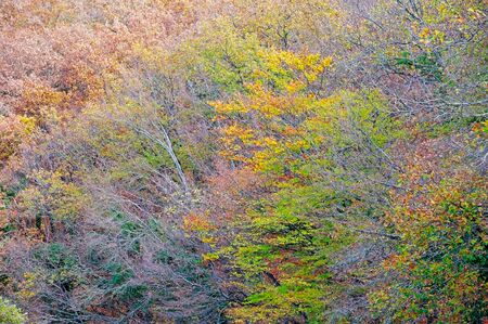 multicolored autumn forest as a background on a November day