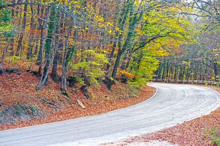Mountain road winds through sunlit autumn forest