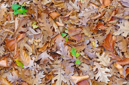 the Brightly colored leaves during autumn in the forest Фото со стока