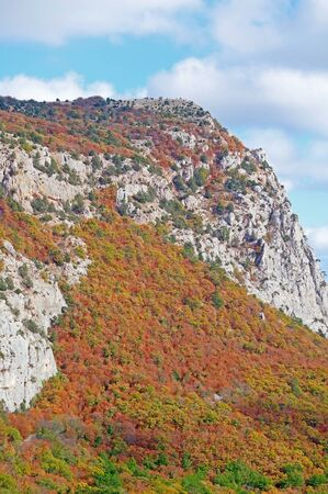 multicolored autumn forest and mountains on a November day