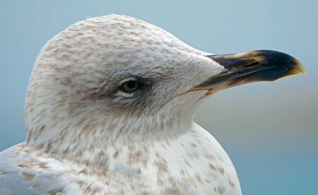 portrait of big sea gull on background of blue sky