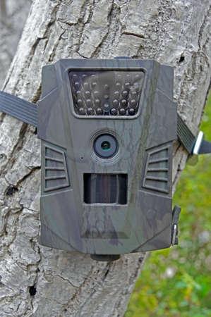 Camera traps with infrared light and a motion detector attached by straps on a tree Stock Photo