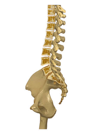 CT Lumbar spine or L-S spine 3D rendering image sagittal view 3D rendering . Clipping path.