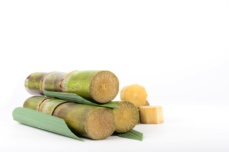 molasses: Close up of sugar cane in isolated white background Stock Photo