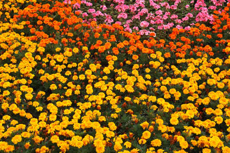 Multi-colored flowered bed in park in summer day Standard-Bild