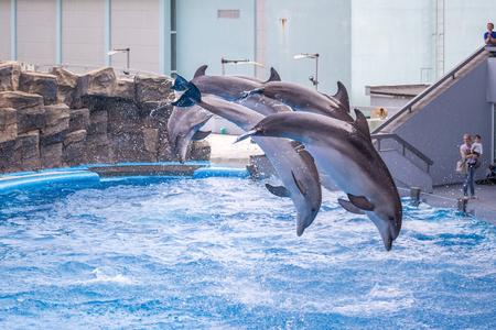 dolphinarium: a cute dolphins during a speech at the dolphinarium, Batumi, Georgia. Stock Photo