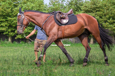 field maple: man training a Beautiful horse,  galloping at the field. Stock Photo