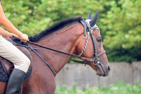 inaction: Portrait of beautiful horse with rope halter.