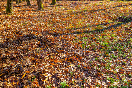 degradation: Fall foliage on lawn. Natural dry leaves in autumn.