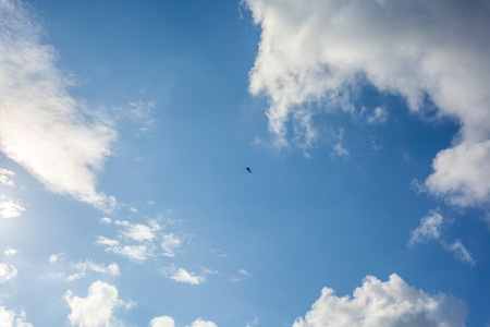 Clouds with blue sky , flying seagull.
