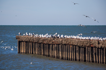 many seagulls flying and sitting on the water and on the rocks of the Black Sea, Poti, Georgia. Stock Photo
