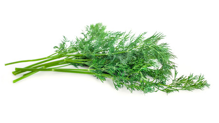 bunch fresh, green dill on a white background. Imagens