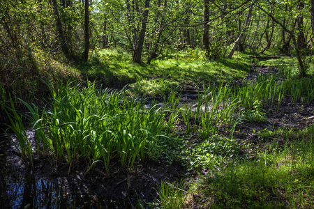 Beautiful green spring forest landscape, Kolkheti National Park.