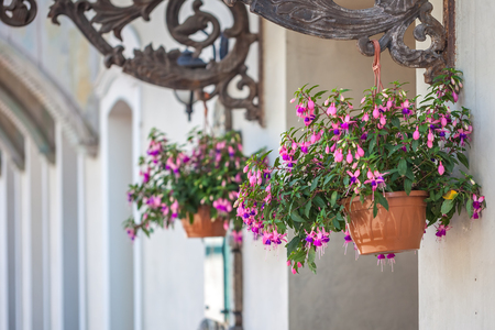 antique vase: Pot with pink flowering plants in a typical street of old Tbilisi