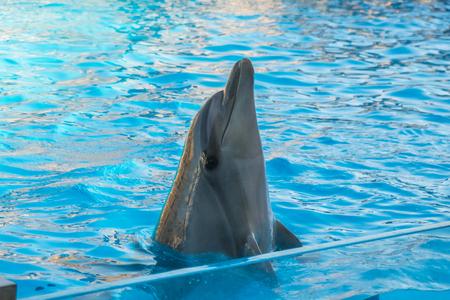 a cute dolphins during a speech at the dolphinarium, Batumi, Georgia. Stock Photo