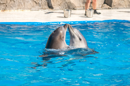 a cute dolphins during a speech at the dolphinarium, Batumi, Georgia. Stock Photo