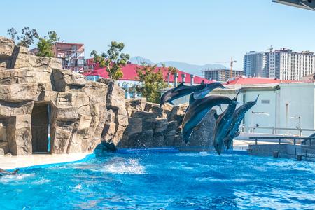 bottlenose: a cute dolphins during a speech at the dolphinarium, Batumi, Georgia. Stock Photo