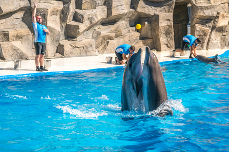 a cute dolphins during a speech at the dolphinarium, Batumi, Georgia - 24.06.2017. Stock Photo
