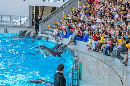 a cute dolphins during a speech at the dolphinarium, Batumi, Georgia - 24.06.2017. Editorial
