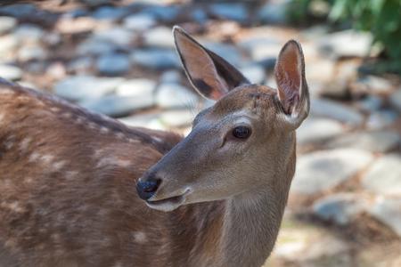 Deer in Tbilisi zoo, Georgia. Animals, wildlife. Stock Photo