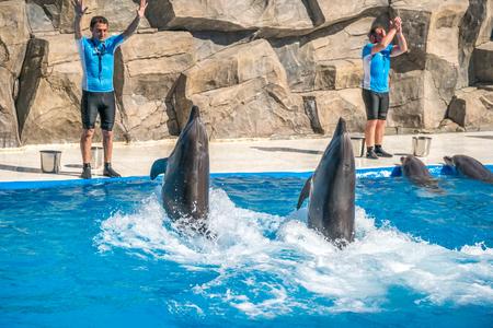 bottlenose: a cute dolphins during a speech at the dolphinarium, Batumi, Georgia - 24.06.2017. Editorial