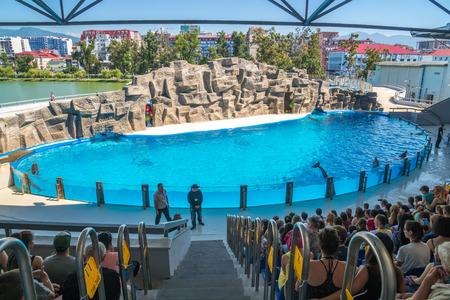 a cute dolphins during a speech at the dolphinarium, Batumi, Georgia - 24.06.2017. Editorial
