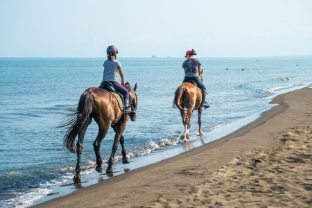 Galloping on a horse of the sea at sunny day Stok Fotoğraf - 84600357