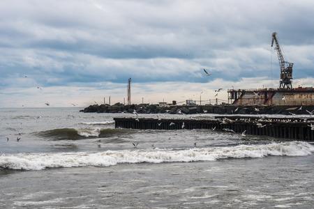 Seagulls on the Black Sea, Poti, Georgia.