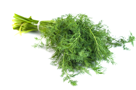 bunch fresh dill herb isolated on white background.