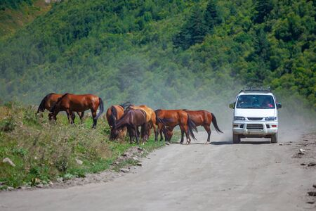 Horses on a rural road to Ushguli, Svaneti, Georgia. Animals.