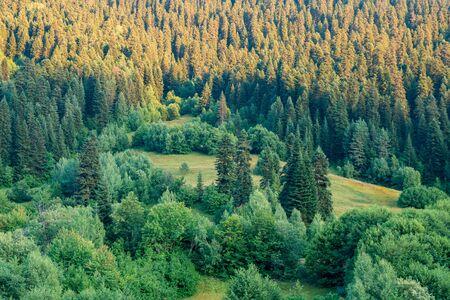 Beautiful view of spurce forest on the way to Hatsvali mountain. Svaneti, Mestia, Georgia. Travel. Banco de Imagens - 130808005