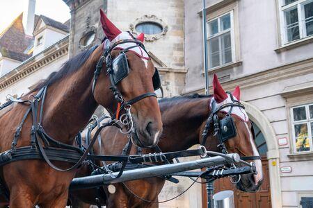 Horse-drawn carriage or Fiaker, popular tourist attraction, on Michaelerplatz in Vienna, Austria. Travel.