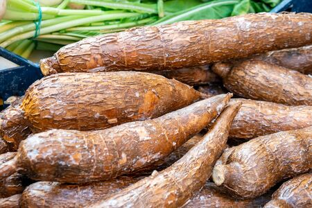 Freshly harvested organic cassava roots in a market. Healthy food.