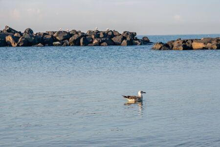 Seagull sitting on the blue sea near the coast. Banco de Imagens - 139879467
