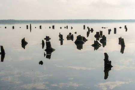 Old pilings in the lake Paliastomi, Poti, Georgia. Landscape