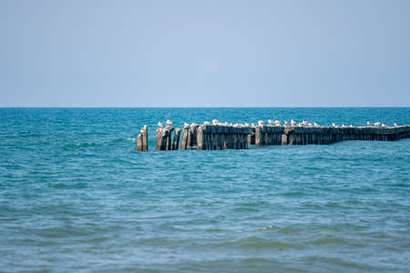 Landscape of sea, seagulls on a concrete Breakwater. Black Sea, Poti. Landscape