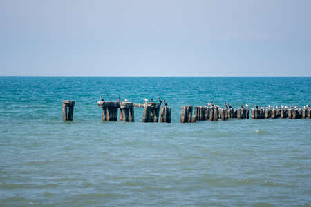 Landscape of sea, seagulls on a concrete Breakwater. Black Sea, Poti Standard-Bild