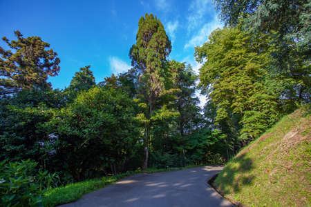Beautiful view of Batumi Botanical Garden is located near Batumi, Adjara region of Georgia 版權商用圖片