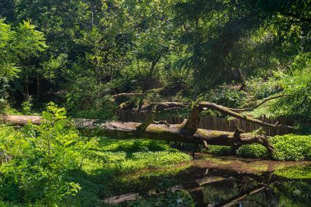 Beautiful park in Tsikhisdziri resort, nature, Adjara, Georgia