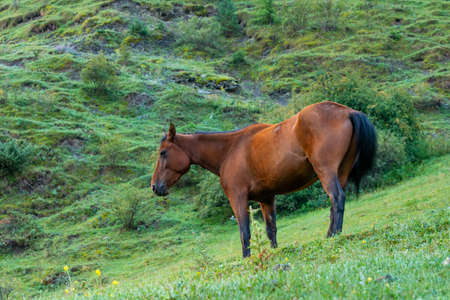 Mountain landscape with a horse grazing in a valley, Georgia. Animal