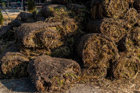 Lawn turf rolls stacked together, grass-plot in the rolls. Nature
